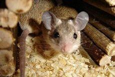 Как выбрать утеплитель, которые не грызут мыши и крысы?