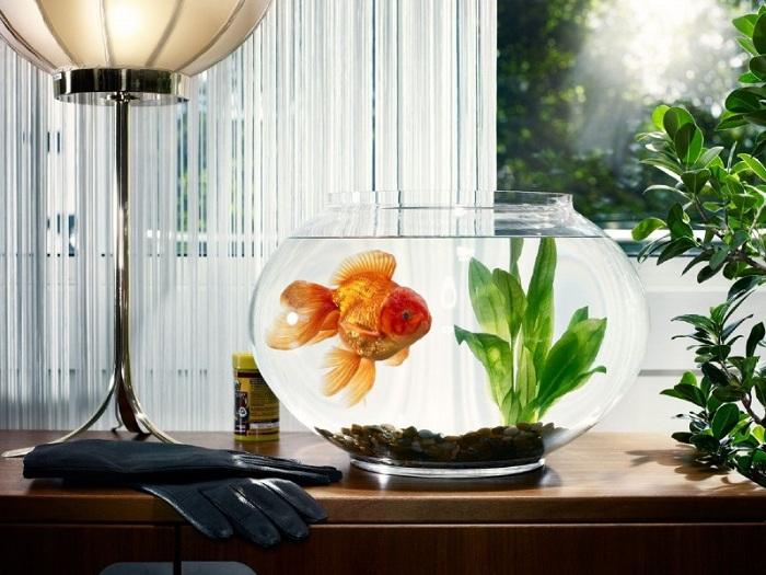 Интерьер квартиры с аквариумом фото