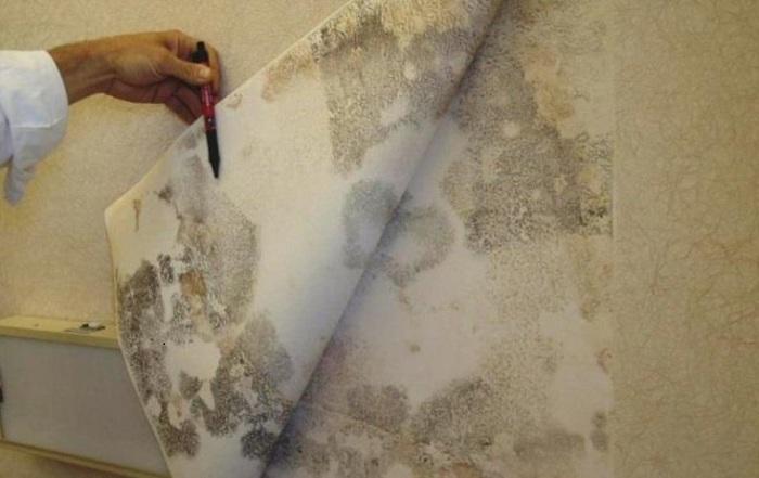 Как вывести плесень со стены в квартире, Советы и рекомендации от специалистов
