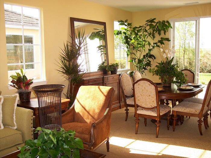 Комнатные цветы и растения в интерьере гостиной фото