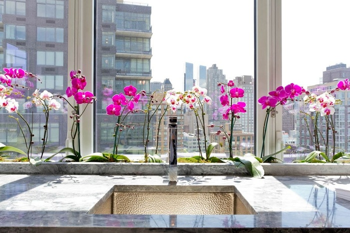 Комнатные цветы в интерьере кухни фото