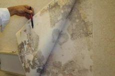 Как вывести плесень со стены в квартире?